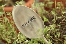 If I Had A Green Thumb / by Mel Pad