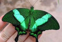 Green / by Kathy Bollmer Skinner