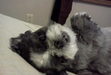 I LOVE Shih Tzu's / by Jann J. Kelley