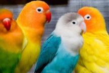 Beautiful Colors / by Debbi Jensen-Roehlk