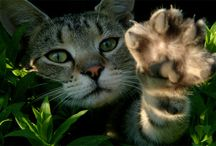 Feline Docs Blog / by Exclusively Cats Veterinary Hospital