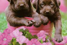 Puppy Love / by Alyson Ben-Yehuda