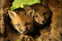 FOXxY   / by Kelli Rockwood Cline
