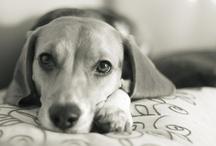 Beagle Board! / by Jessica Bollinger