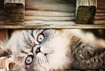 Cuteness / by Sue Nueckel