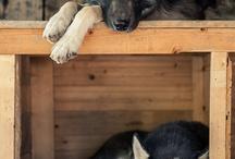Dogs / by Cami Yocom