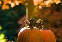 fall / by Kari Kunkel
