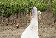 Wedding Theme - Wine Country 1 / by Milestone Events