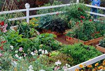 My Future Garden! / by Lauren Sisk