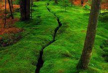 Amazing nature / by Viviane Ellis