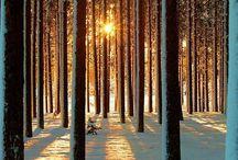 winter / by Michelle Stebbins