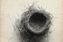 Empty Nest: Strategies To Help Your Kids Take Flight / by Marci Seither