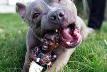 animals & pets / by Bec Jones