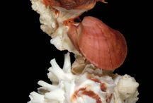 She Shells! / by Donna Williams