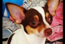 Pets I Love / by Cheryl Smith Reiter