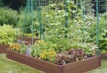 garden / by Sue Radcliff