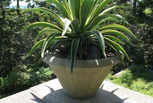 Agave Urns / by Woodlawn Landscaping