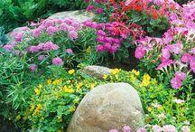 Gardens and Garden Ideas / by Sheila Herbert