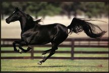 Equines in Motion / by Susan Duran