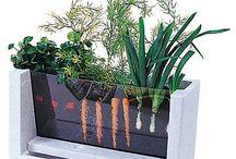 Garden Help Ideas / by Christina Murphy