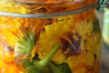 Potions & Remedies / Non-Rx solutions. / by Jennifer Sage