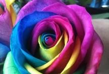 Color / by Hannah Brzuchalski