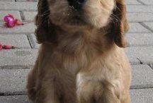 Puppies & Dogs / by Karen Mason