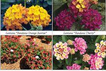 Gardens/flowers / by Keri Mayo Devine