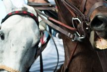 Polo / Love of the Horse & Ball / by Lisa Hogue