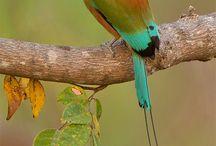 Birds of a Feather / by Lisa Gonsalez