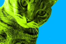 Cat Pop Art / by Meow Mix
