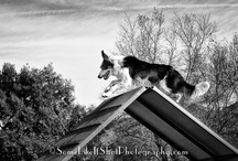 Black-N-White Photography / by Pam's Dog Academy