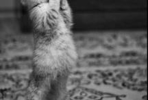 For My Love Of Kitties / by Elizabeth Georgianna