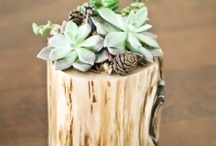 Nature Crafts / by Michelle Rinosa-Sy