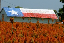 OhTexas / by Anthony McClure