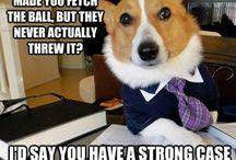 Memes of Hilarious Shame / by Rachel Aaron