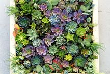 outside - room to grow / we're taking the remodel outside!! / by Nicole Tarrant