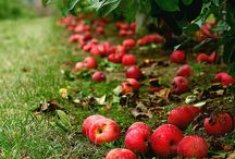 apples / by Louise