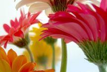 Flowers / by Judi Glover