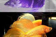 water animals / by Bonnie Sugg