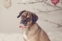 Dog / by Bella Redmond