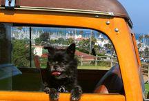 Pet Friendly Santa Barbara / by Santa Barbara