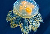Underwater / by Deni Rosenberry
