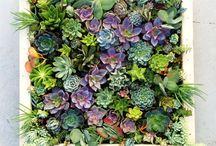 Garden Delights / by Julie Thatcher