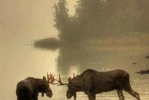 Animals / by Kelli Keays