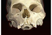 Skulls / by garytussey