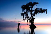 Louisiana / by Barbara Rivers