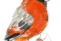 avian / by Linda Pilgrim