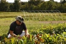 Farm to table / by Katie Felten LLC