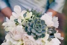 Beautiful Flowers / by Sherri Kunz Hazen